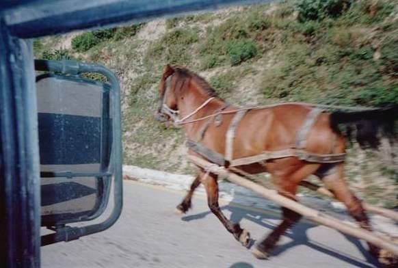 641 horse