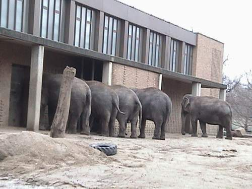 Elephant parking only!